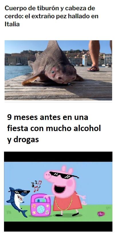 Tiburon Pig - meme