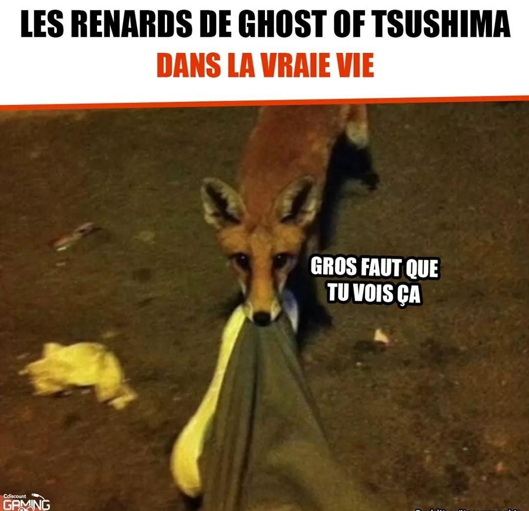 Sah les renards - meme