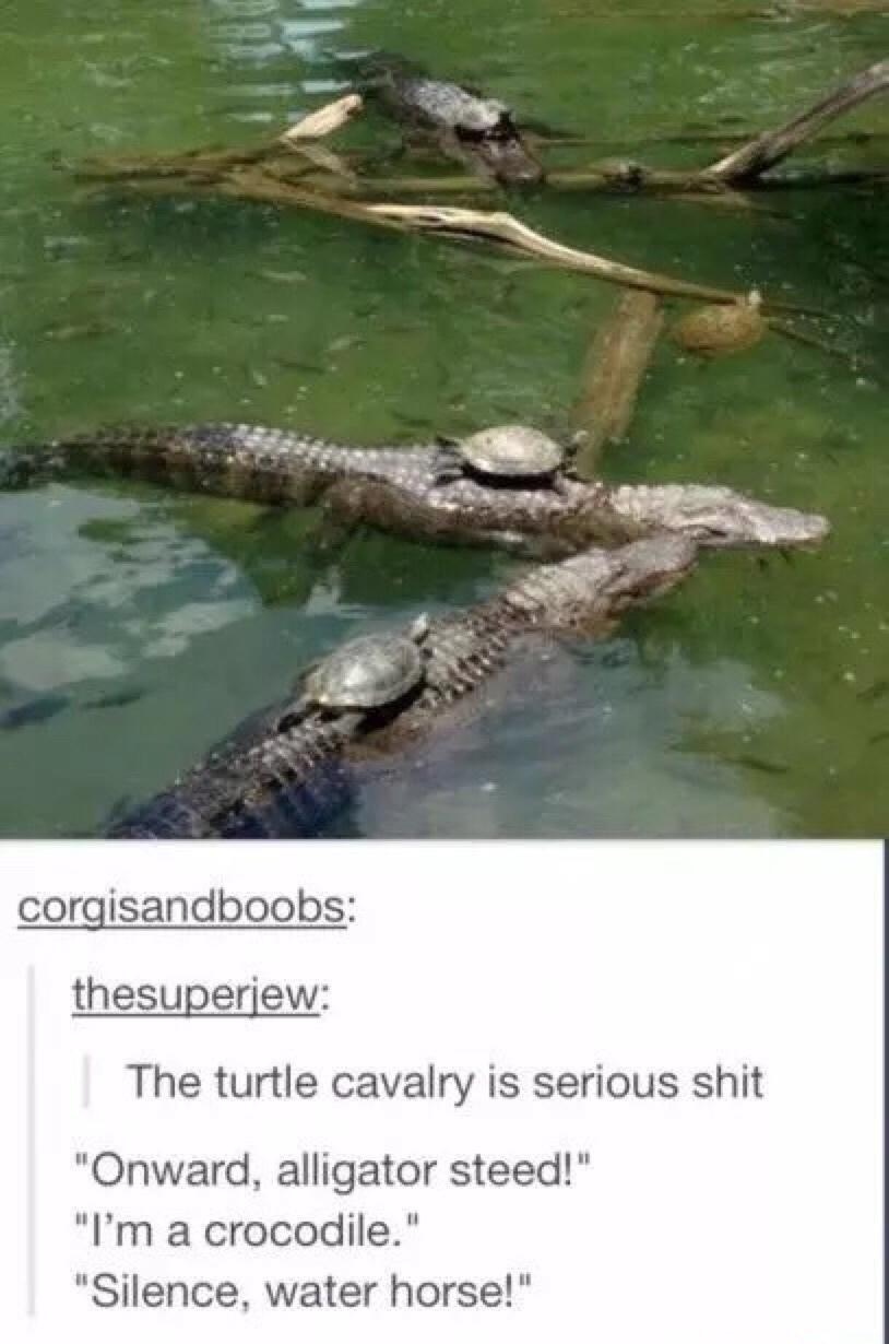 water horse - meme