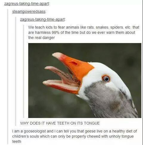 Ducks Are Satanic - meme