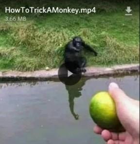 Silly monkey. - meme