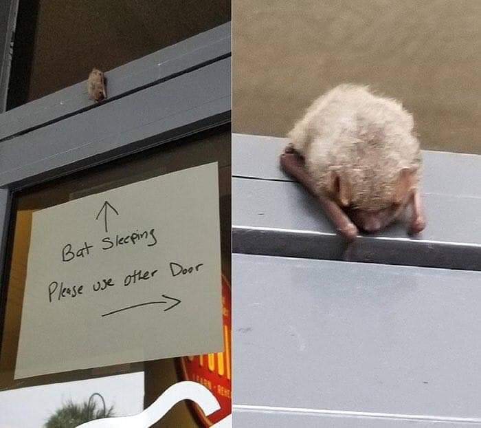 Bats are adorable lil sky puppies, you cant change my mind - meme