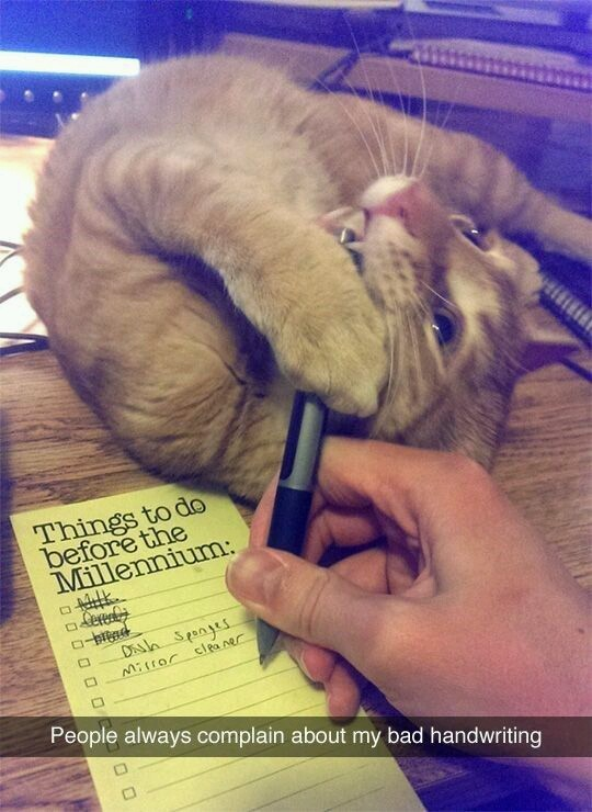 Bad handwriting caused by cat - meme