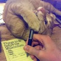 Bad handwriting caused by cat