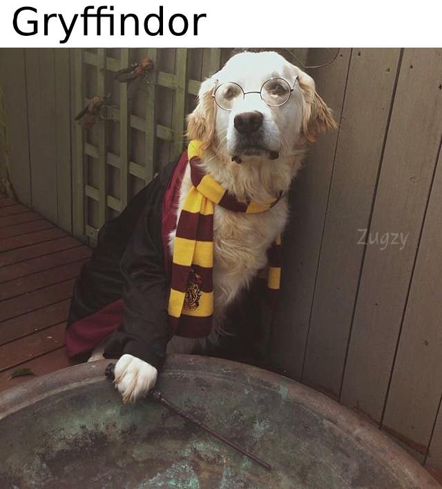 Gryffindor - meme