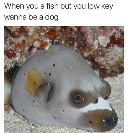 Pupperfish - meme