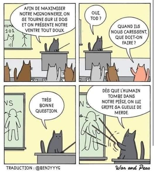 C'est la fameuse chattaque dans la gueule - meme