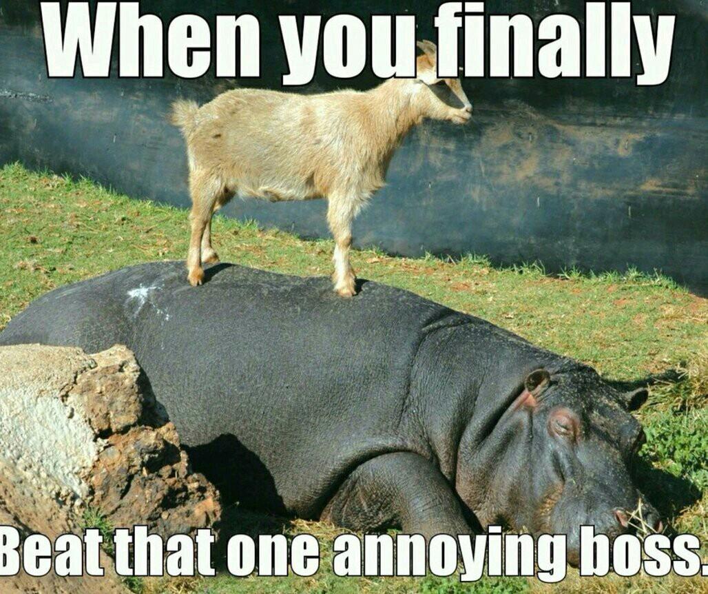 Wth did that goat do tho? - meme