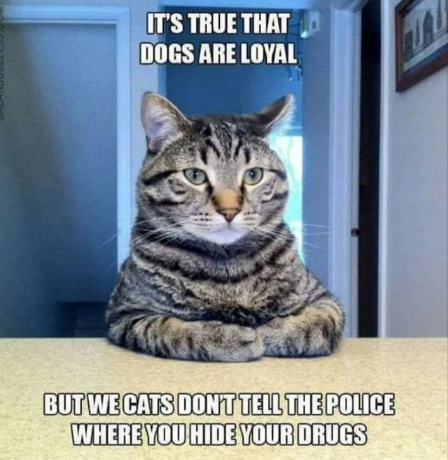 Cat's don't tell the police where you hide your drugs - meme