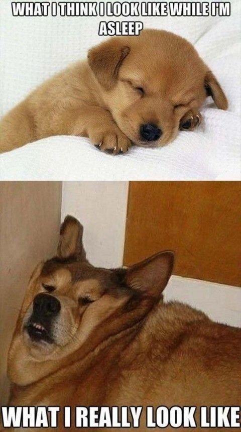 Sleepy doge - meme