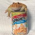 spaghettio guardian