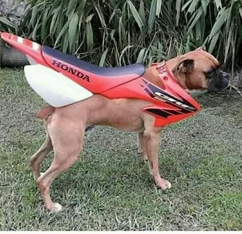 uma moto vestida  de cachorro - meme