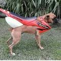 uma moto vestida  de cachorro