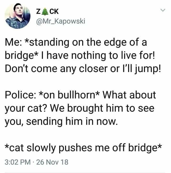 Cats are assholes - meme