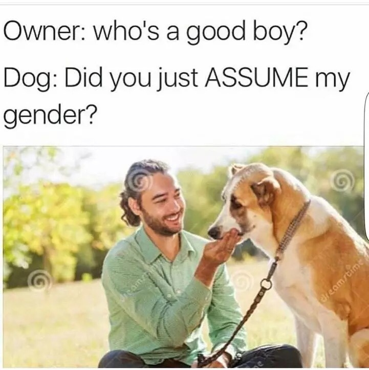 Did you just assume my gender - meme