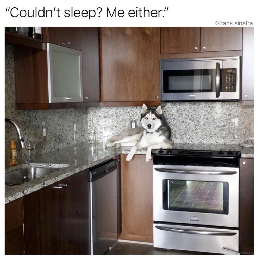 Kitchen dog - meme