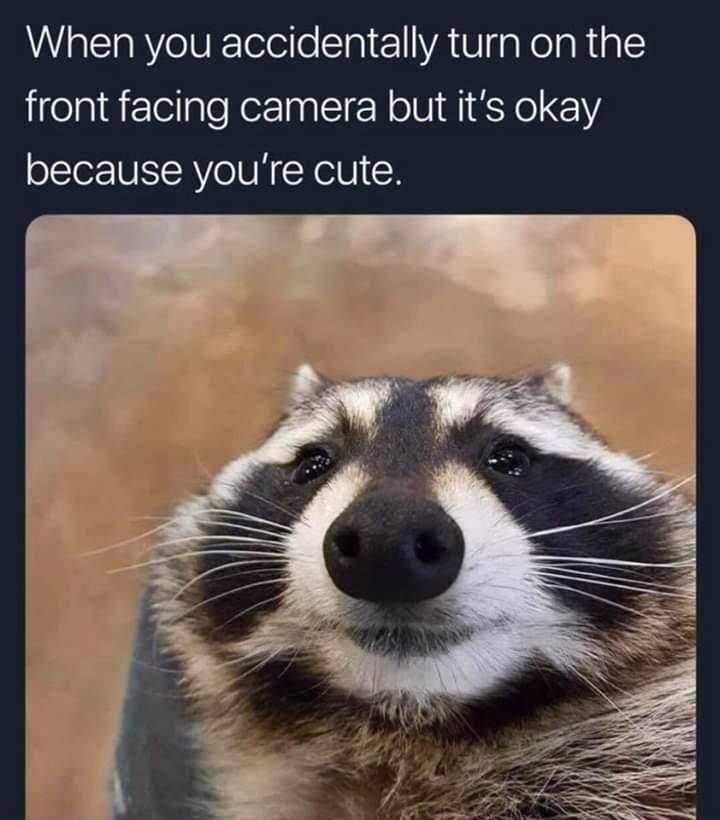 Mr.cutie face - meme