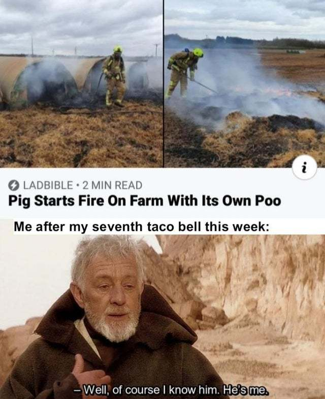 Pig starts fire on farm with its own poo - meme