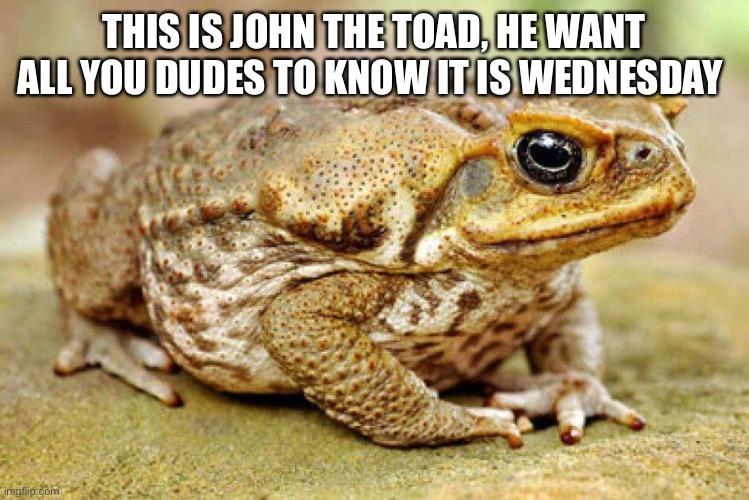 John the toad - meme