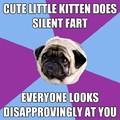 Kitten farts