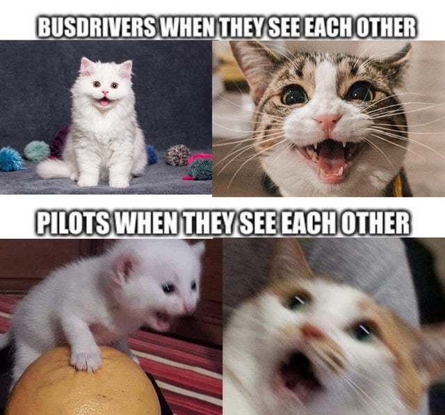 Pilots vs bus drivers when they see each other - meme