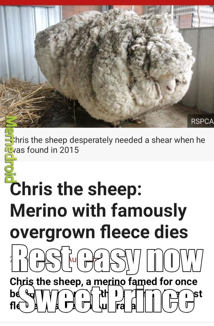 He was more than just a sheep - meme