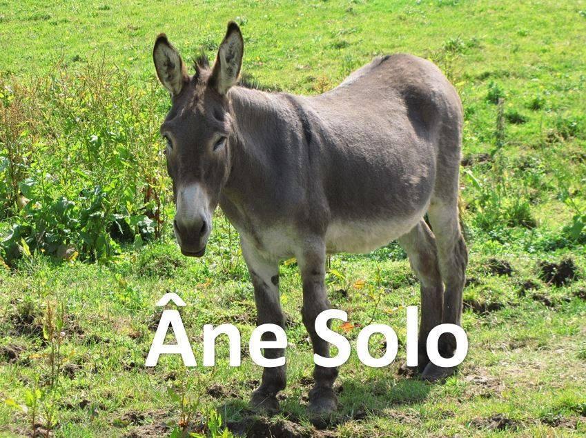 Ane Solo - meme