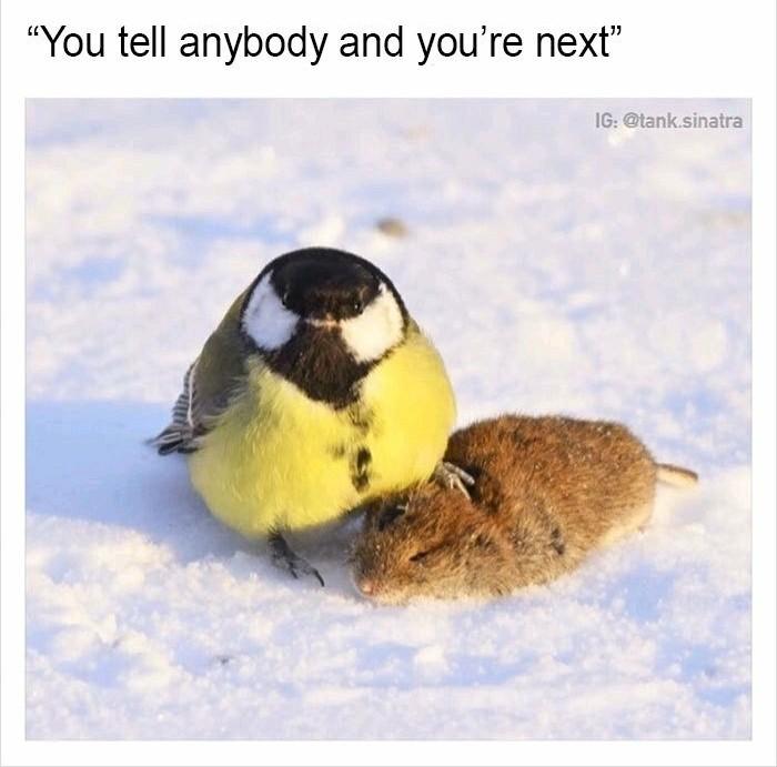 Bird-Squeezer - meme