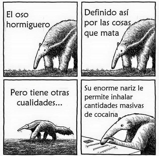Oso drogadicto - meme