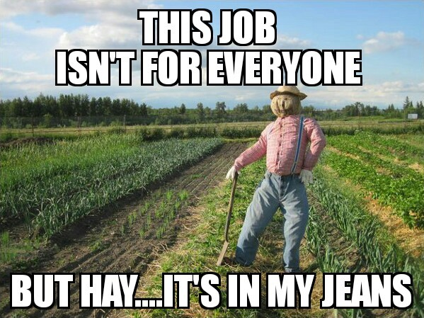 Scarecrow Stephen - meme