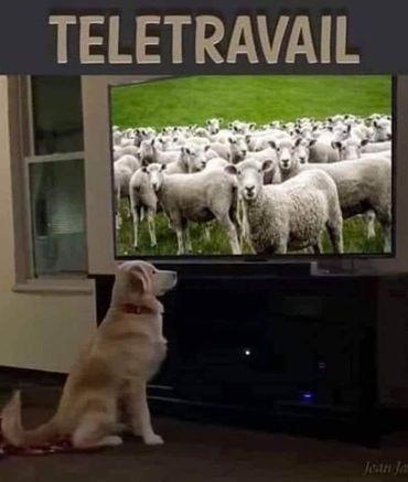 télétravail - meme
