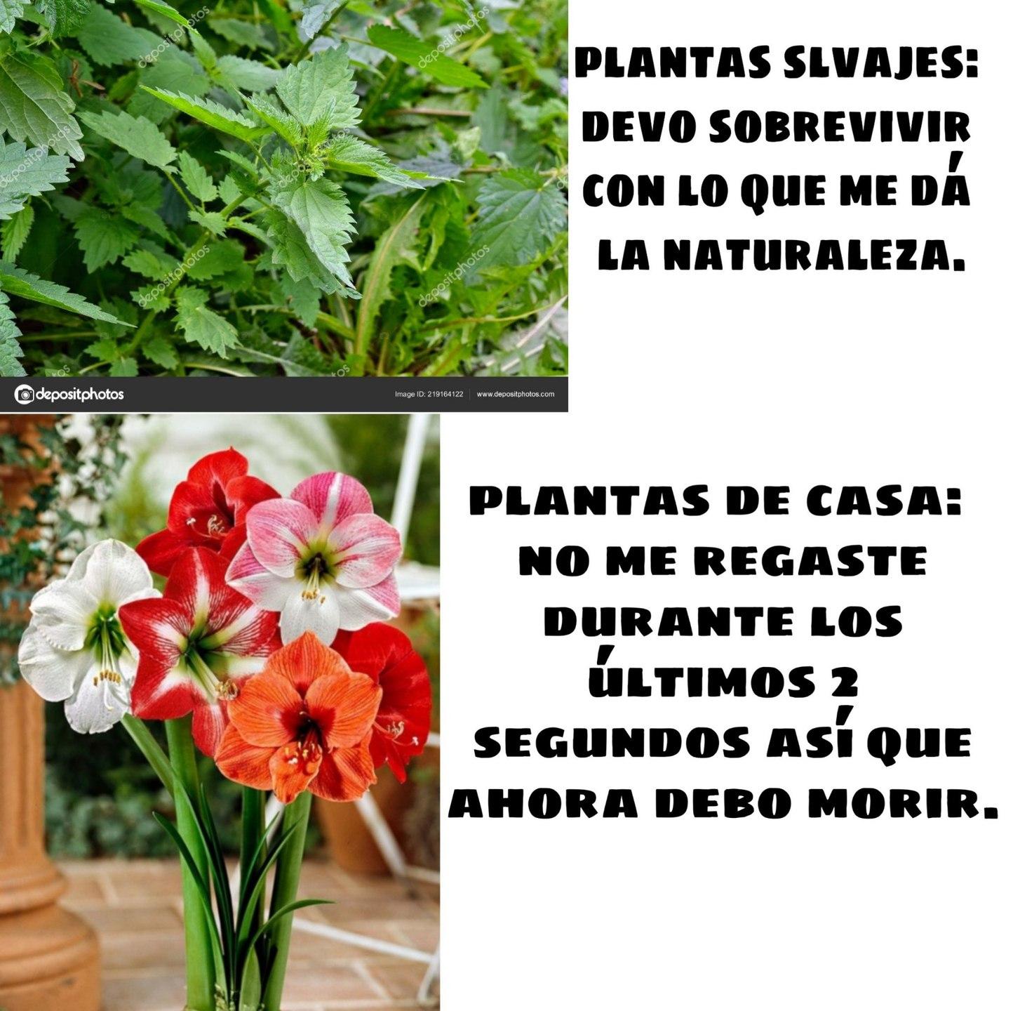Plantas - meme