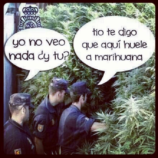 Smoke weed - meme