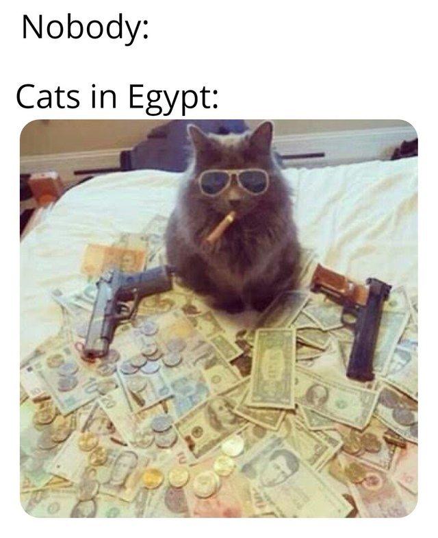 Cats in Egypt - meme