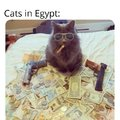 Cats in Egypt