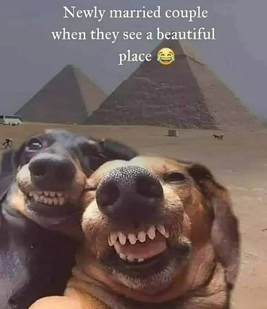 Comment a caption - meme