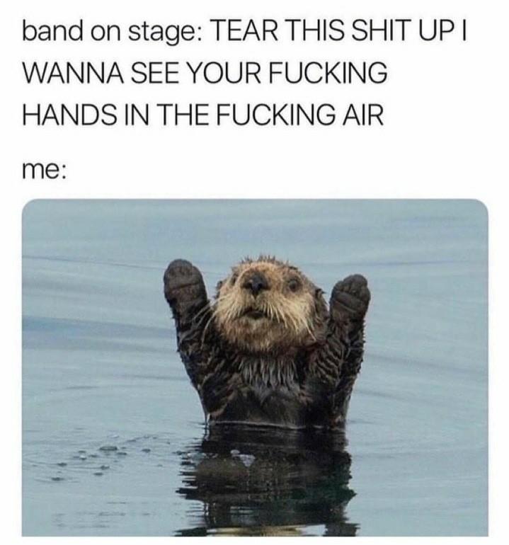 Beaver - meme