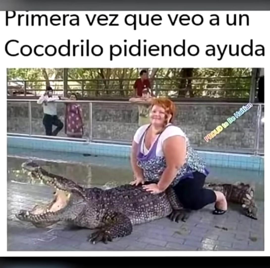 Ahora me da pena ese cocodrilo - meme
