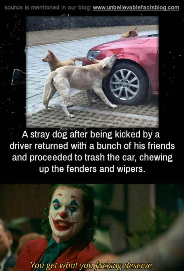 A stray dog after being kicked by a driver returned to trash the car - meme