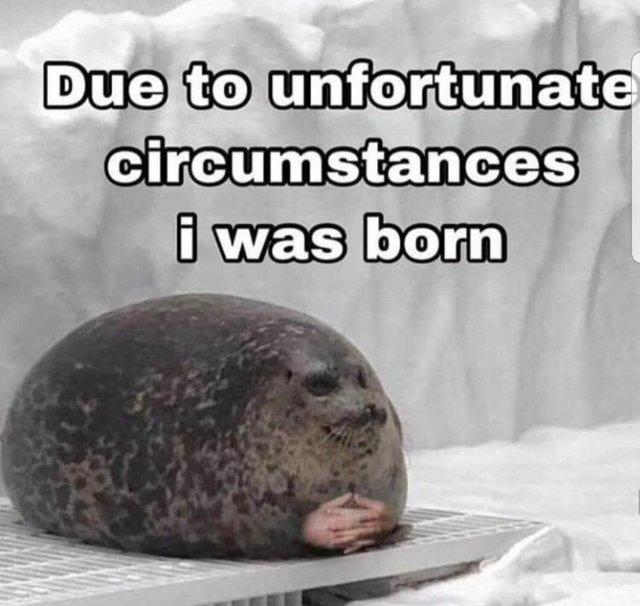Due to unfortunate circumstances I was born - meme