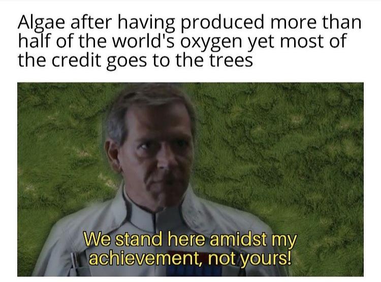 algae - meme