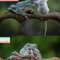Pepe gotta eat too