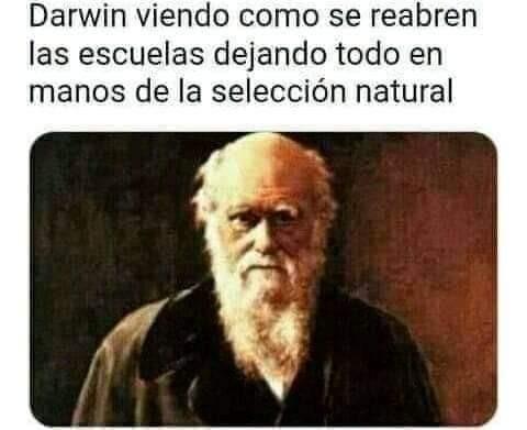 El Darwings - meme