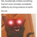 3rd Comment Kicks Cats
