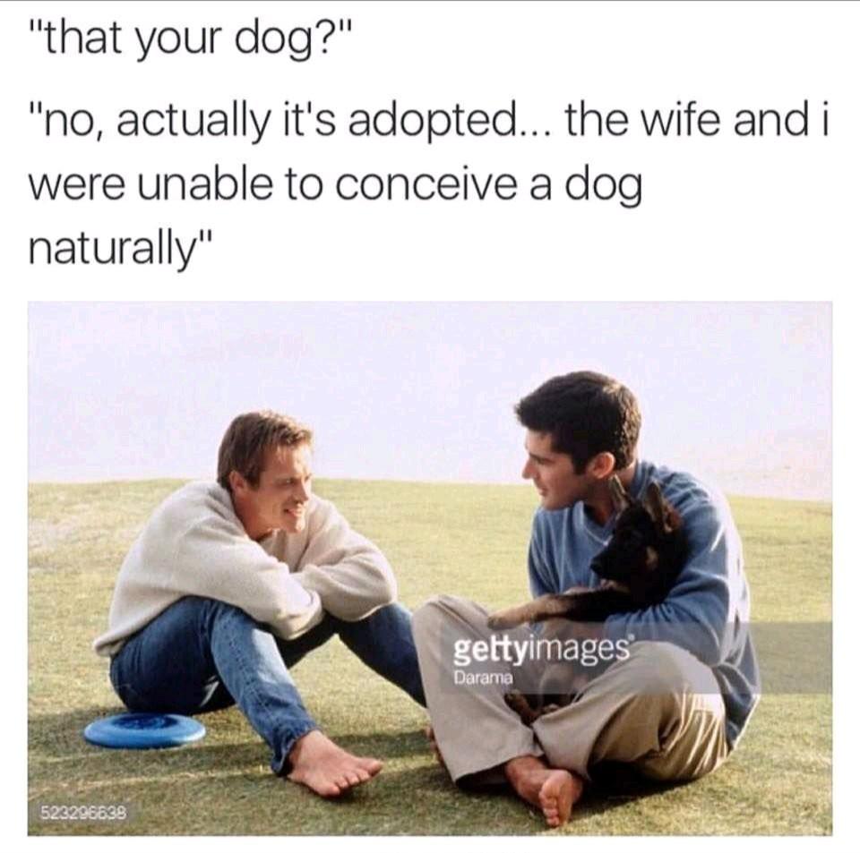 Preggo with a doggo - meme