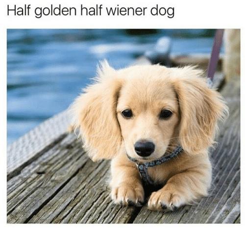 Half adorable and half adorable - meme