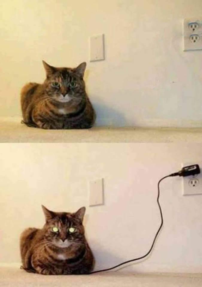quando seu gato está muito calmo - meme