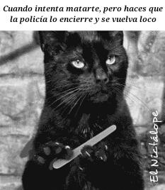 El gato negro de Poe - meme