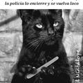 El gato negro de Poe