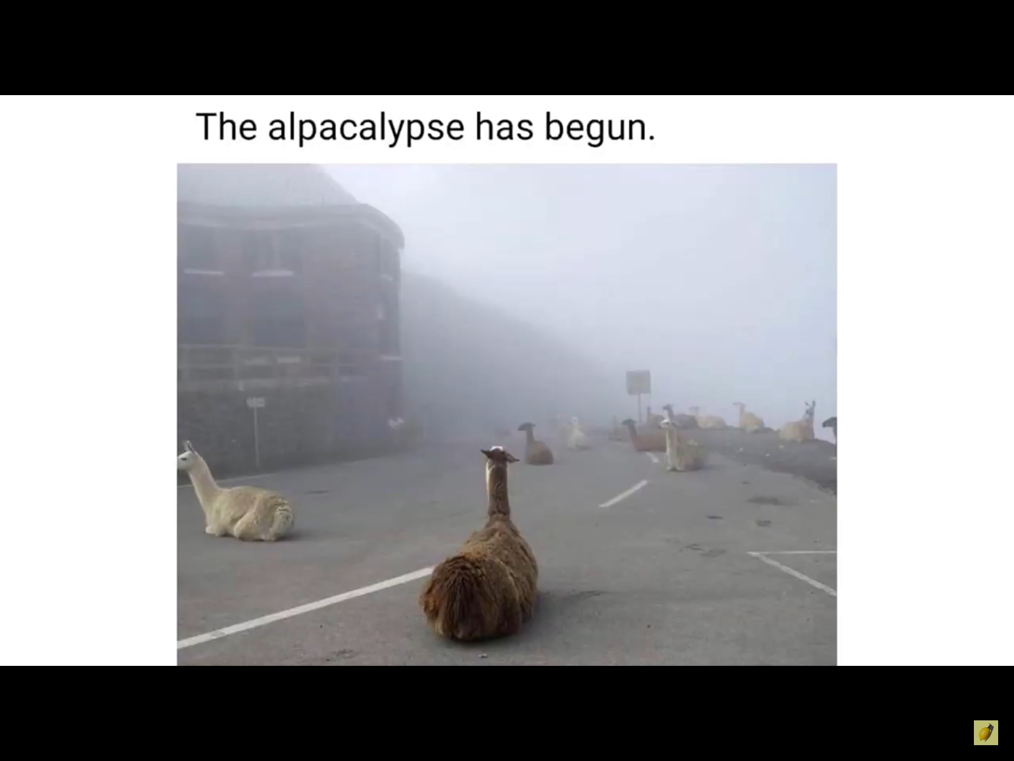 alpacalypse - meme